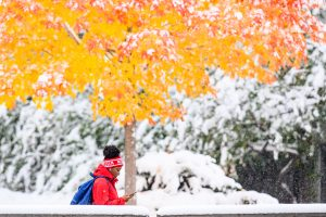 Woman walking under a yellow tree in the snow