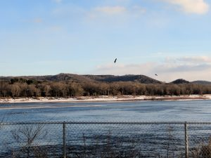 Eagle flying over a river
