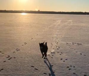 Black dog running on snow