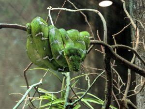 Snake on tree limb